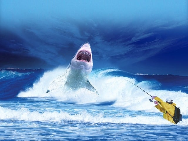 Great White Shark - most dangerous animals