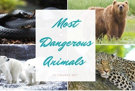 Most Dangerous Animals