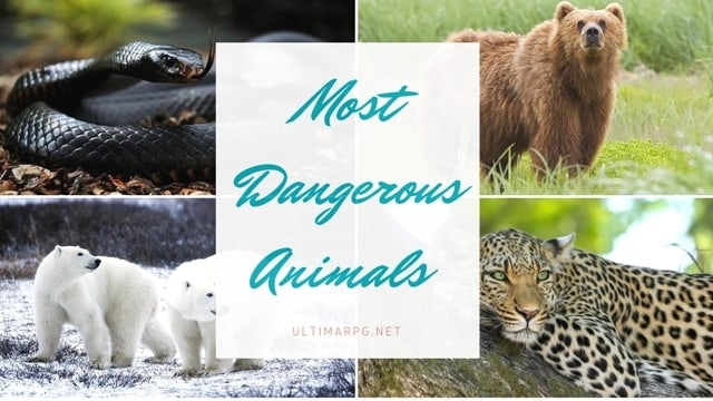 Most Dangerous Animals